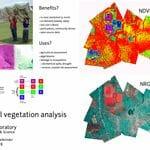 drone aerial vegetation analysis